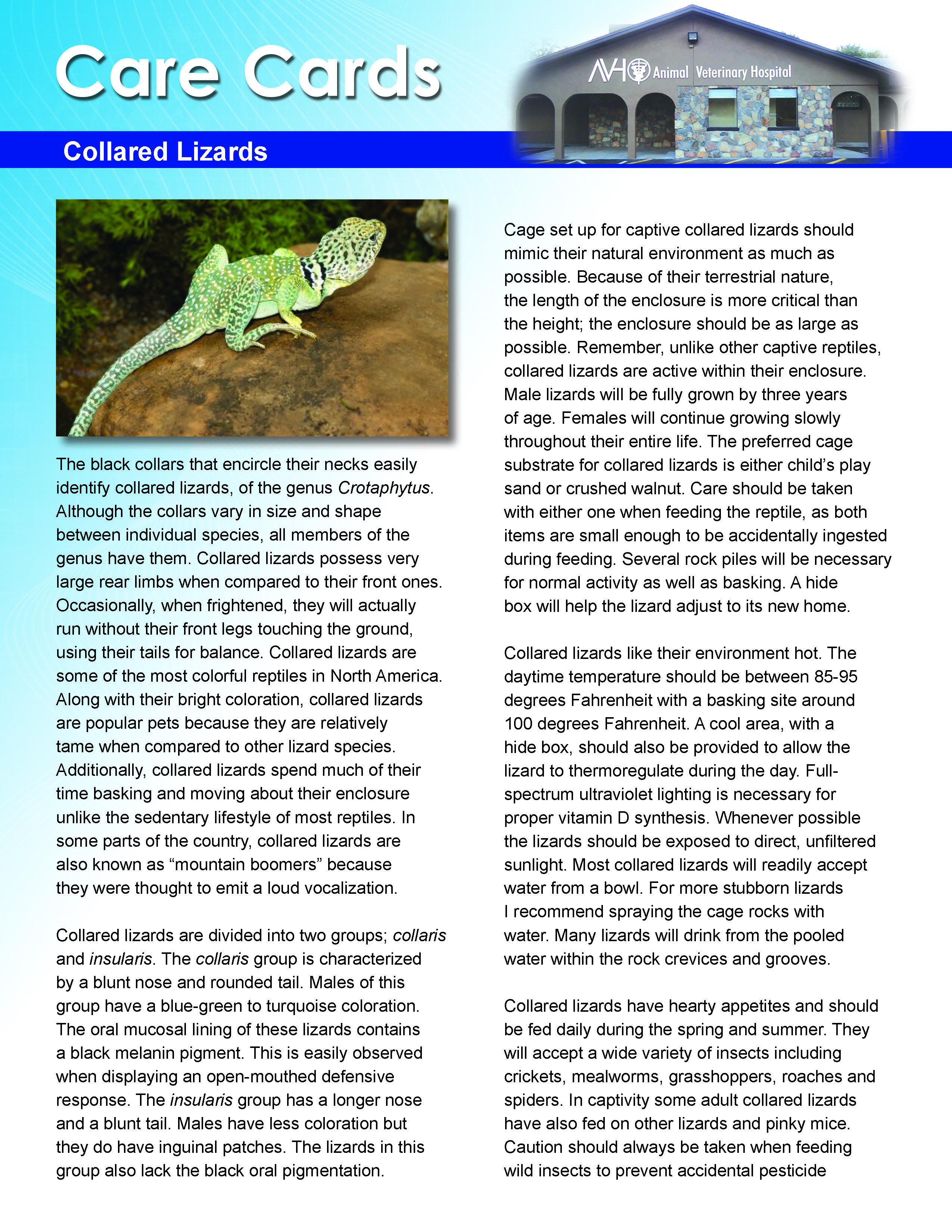 Collared Lizard Care Card
